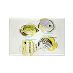 4ButterflyFish Magnets