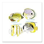 4ButterflyFish Square Car Magnet 3