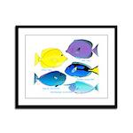 5 Unicornfish Surgeonfish Framed Panel Print