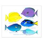 5 Unicornfish Surgeonfish Posters