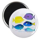 5 Unicornfish Surgeonfish Magnets