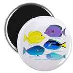 5 Unicornfish Surgeonfish Magnets
