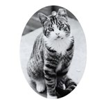 AEUC Tabby Cat Oval Ornament
