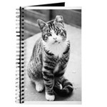 AEUC Tabby Cat Journal