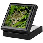 AEUC Tabby Kitten Keepsake Box