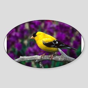 American Goldfinch Bird Black and Yellow Sticker