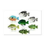 7 Sunfish Posters