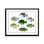 7 Sunfish Framed Panel Print