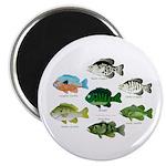7 Sunfish Magnets