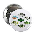 7 Sunfish 2.25