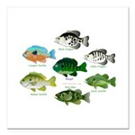 7 Sunfish Square Car Magnet 3