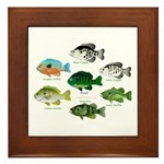 7 Sunfish Framed Tile