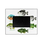 7 Sunfish Picture Frame