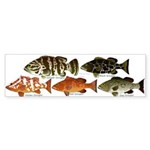 5 Grouper Bumper Sticker