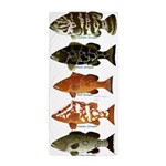 5 Grouper Beach Towel