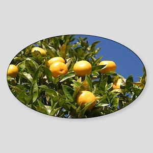 California Lemons  Sticker (Oval)