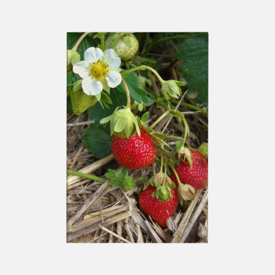 Strawberries in Summer Rectangle Magnet