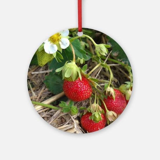 Strawberries in Summer Round Ornament
