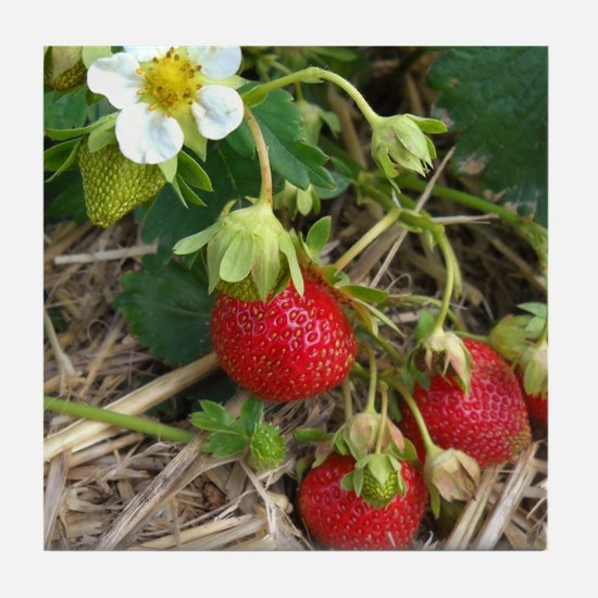 Strawberries in Summer Tile Coaster