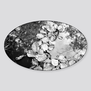 Leaves in a puddle Sticker (Oval)