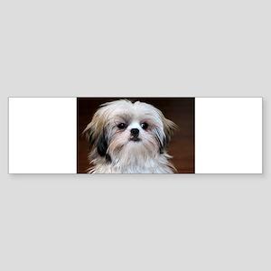 Precious Little Shih Tzu Bumper Sticker