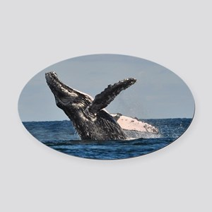 Humpback Whale 2 Oval Car Magnet