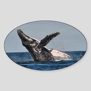 Humpback Whale 2 Sticker