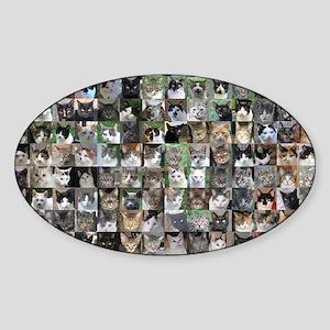 Cat Shelter Jessica's Cats Sticker (Oval)