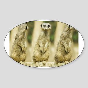 Sweet Meerkat Sticker (Oval)