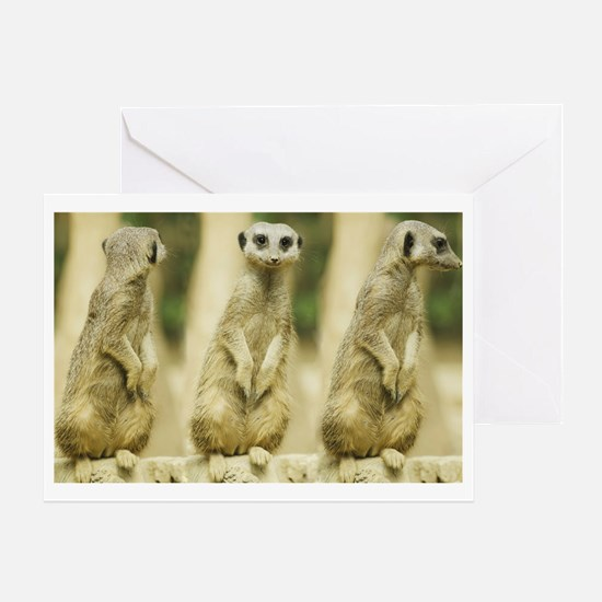 Sweet Meerkat Greeting Card
