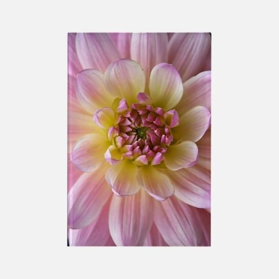 Dahlia Flower Rectangle Magnet