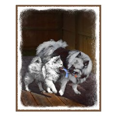 Keeshond Playtime Posters
