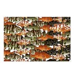 5 grouper pattern Postcards (Package of 8)