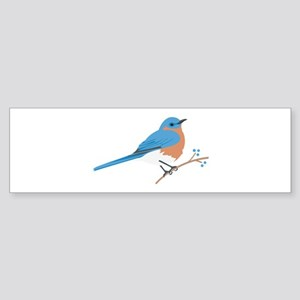 Eastern Bluebird Bumper Sticker