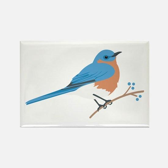 Eastern Bluebird Magnets