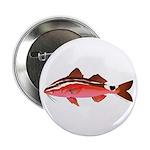 Rosy Goatfish 2.25