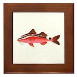 Rosy Goatfish Framed Tile