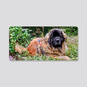 Leonberger Dog Aluminum License Plate