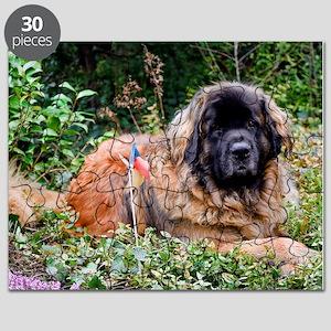 Leonberger Dog Puzzle