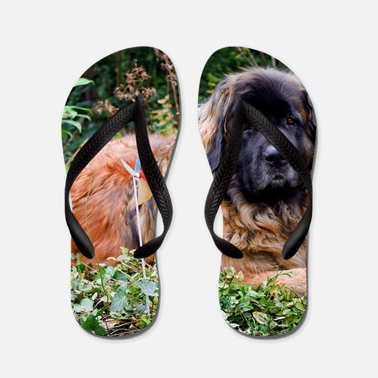 Leonberger Dog Flip Flops