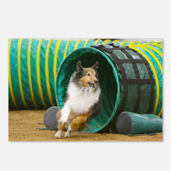 Agility Sheltie Postcards (Package of 8)