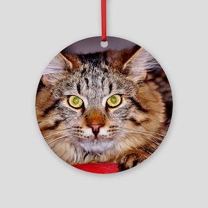 Maine-Coone Cat Ornament (Round)