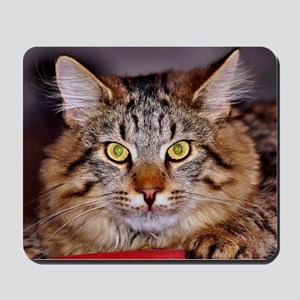 Maine-Coone Cat Mousepad