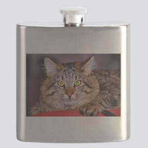 Maine-Coone Cat Flask