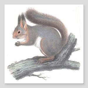 "Vintage Squirrel Square Car Magnet 3"" x 3"""