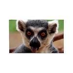 Lemur 3'x5' Area Rug