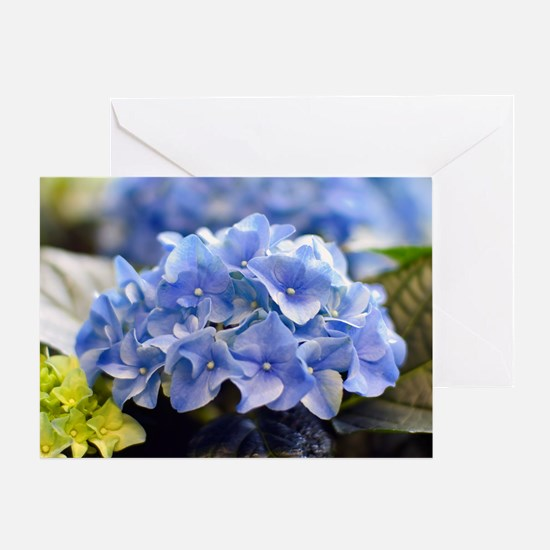 Blue hortensia Greeting Card
