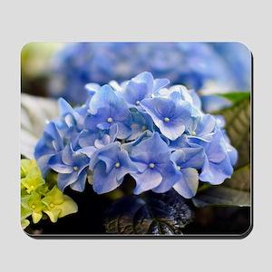 Blue hortensia Mousepad