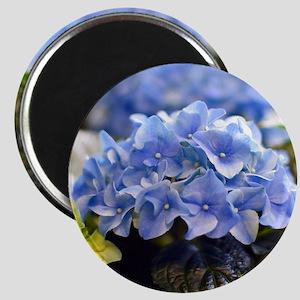 Blue hortensia Magnet