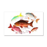 5 snappers Car Magnet 20 x 12